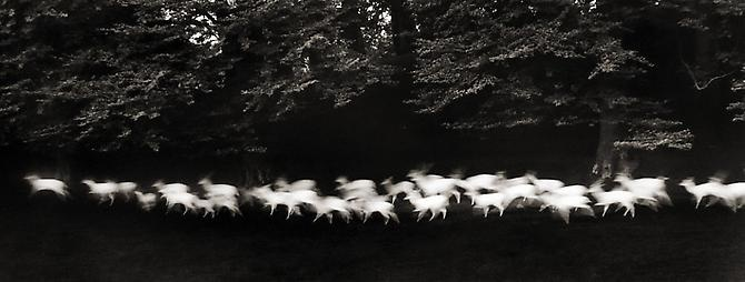 Running Deer, Wicklow, Ireland