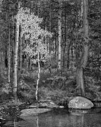 Bishop Creek, Aspen, Autumn