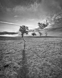 Tree and Animal Tracks, Central California