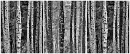 Trees in Exchange, Autumn, California Eastern Sierras – Triptych