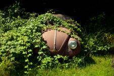 Overgrown VW