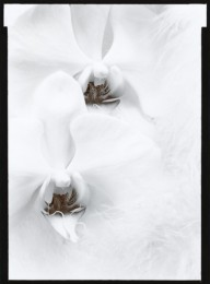 Orchids (sold)