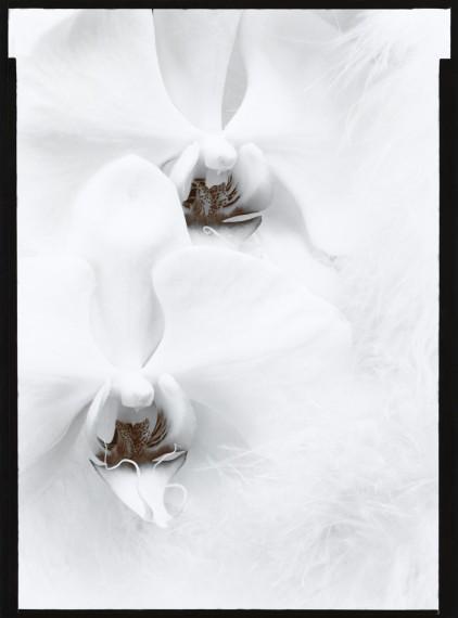 Orchids: Olivia Parker (Sold)