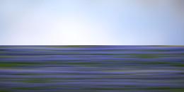 Wildflower41