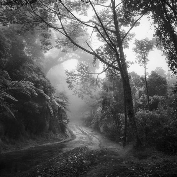 Ciwidey Highland, Java (ALT15)