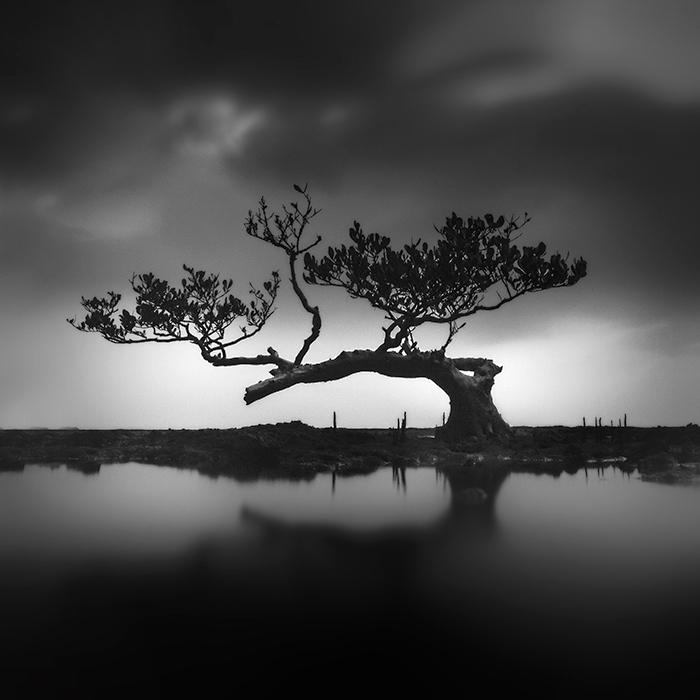 Mangrove Tree Of Life By Hengki Koentjoro Susan Spiritus