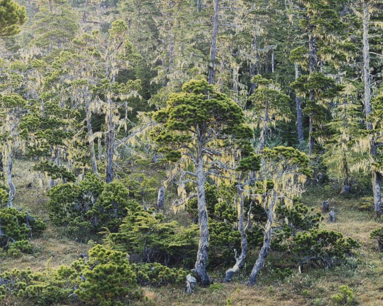 Rivendell Woods, Alaska