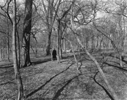 Eleanor in the Woods