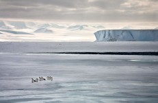 Running to See, Ross Sea, Antarctica