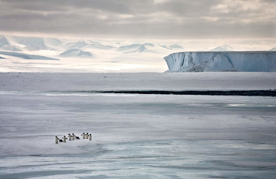 Running to See, Ross Sea, Antarctica