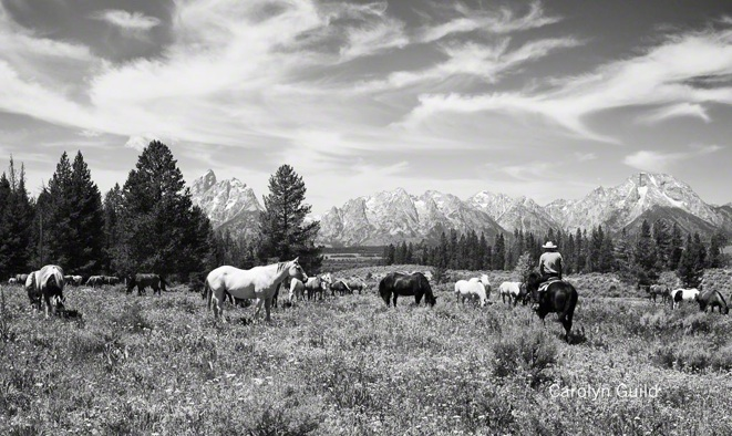 Triangle X Horses at the Tetons, WY