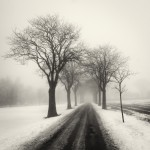 Fog and Snow, Sweden