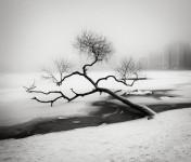 Fallen Tree, Sweden
