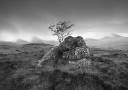 Tree & Rock, Rannoch Moor, Scotland