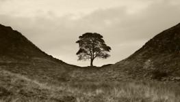 Hadrian's Wall Tree, UK