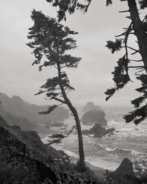 Trees on Bluff