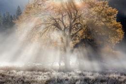 Autumn, Elm & Sunbeams, Cook's Meadow