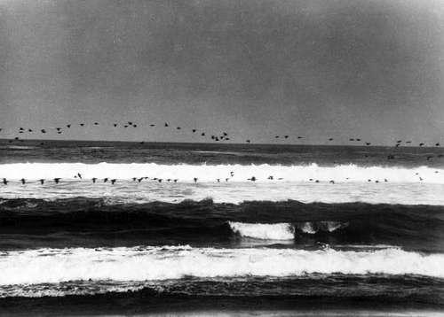 Flock of Sea Birds: Manual Alvarez Bravo  (Flight Over the Sea) (Sold)
