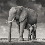 Mother and Calf, Amboseli, Kenya