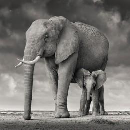 Mother and Calf, Amboseli, Kenya