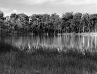 Cobbler, Lake Victoria, Australia