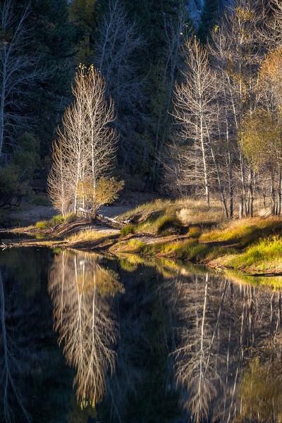 Cottonwoods Reflected, Merced River, Yosemite National Park