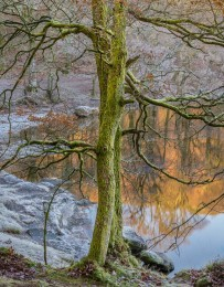 Tree, Frosty Morning, Derwentwater, England