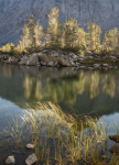 Backlit Trees and Grasses, Pond, Eastern Sierra