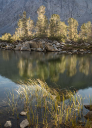 Backlit Trees and Grasses, Pond, Eastern Sierra