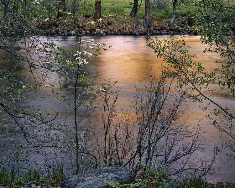 Dogwood Spring, Merced River, Yosemite