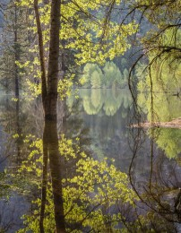 Flooded Meadow, Yosemite