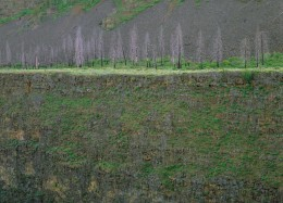 Dead Trees, Black Creek Canyon, Idaho