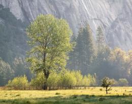 Spring Morning, Ahwahnee Meadow, Yosemite