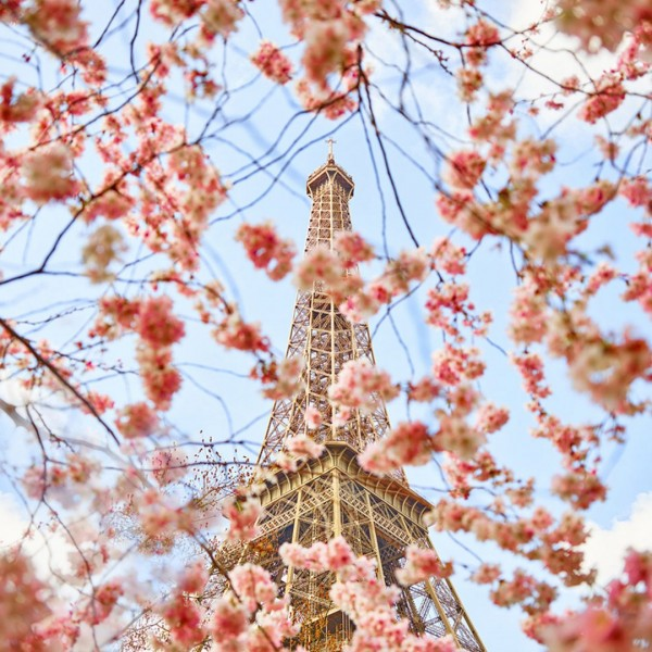 Cherry Blossoms, Paris, France