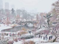 December Snow, Central Park, NY
