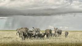 Elephant Day Care, Amboseli