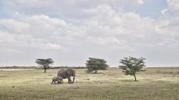 Elephant Mother and Calf, Maasai Mara