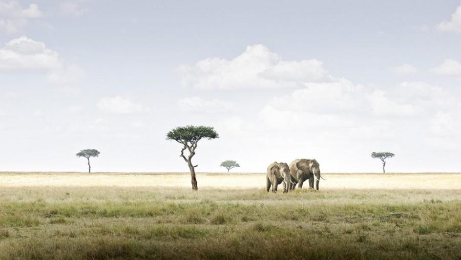 Elephant Pair, Amboseli, Kenya
