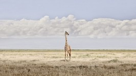 Head in Clouds, Amboseli, Kenya