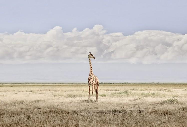DB_Head-in-the-Clouds-Amboseli-Kenya-2019-2-1080x608