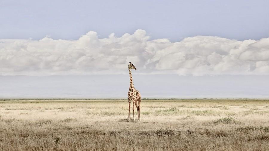 Head in Clouds, Amboseli, Kenya