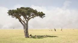 Paradise, Maasai Mara, Kenya