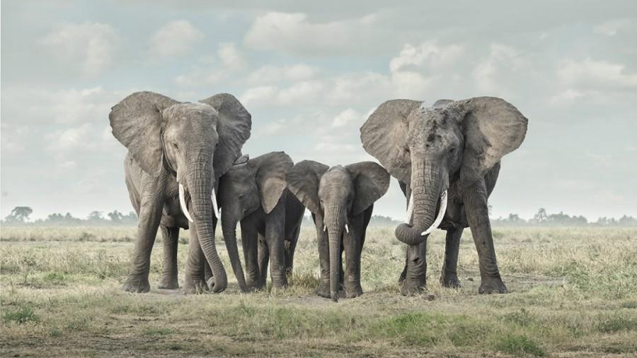 Solice, Amboseli, Kenya