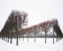 Winter, Red, Pushkin, Russia