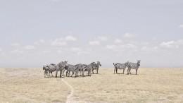 Zebra Plains, Maasai Mara, Kenya