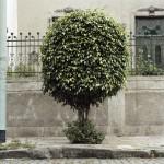 Tree Portrait #2