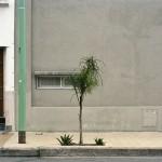 Tree Portrait #9