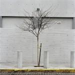 Tree Portrait #10