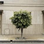 Tree Portrait #11