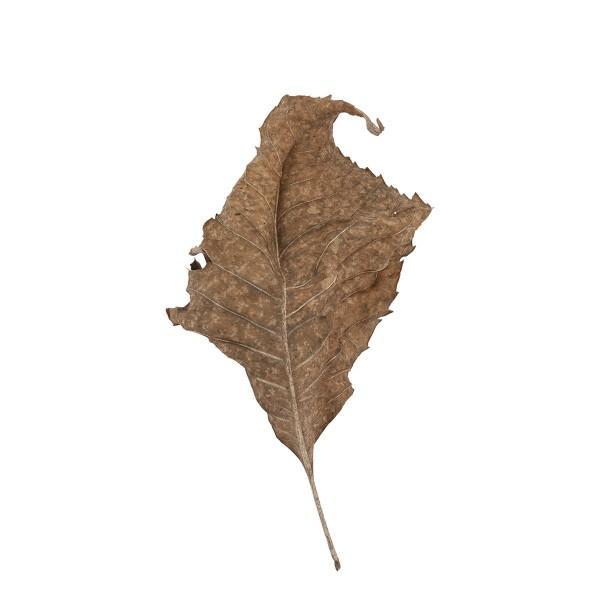 Fallen Leaves #10